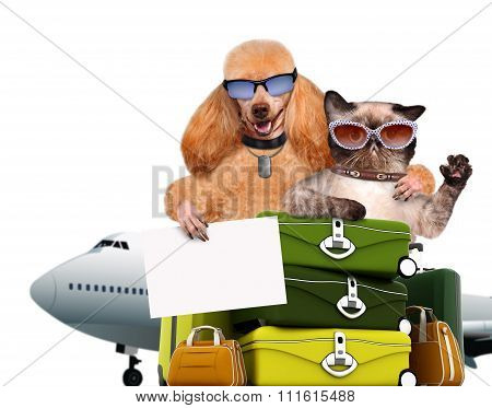 Dog and cat traveler.
