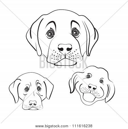 muzzle dogs, vector illustration on a white background poster
