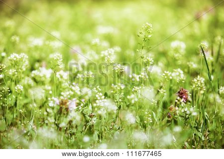 summer landscape, green meadow with flowers closeup