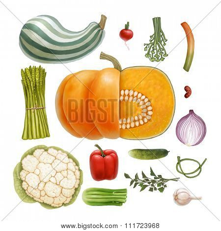 Hand drawn vegetables, isolated on transparent background: vegetable marrow, pumpkin, radish, asparagus, paprika, cucumber, garlic, ramson, bear's onion, bean, parsley, fennel, cauliflower
