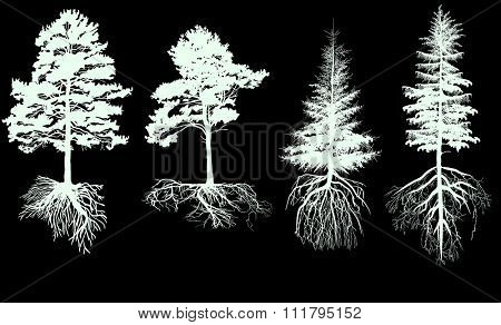 illustration with pine tree silhouettes isolated on black background