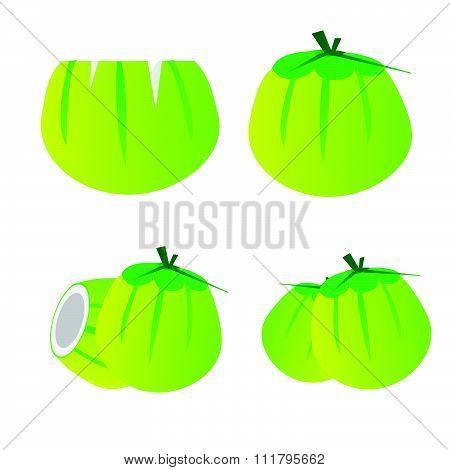 Yung coconut vector vector set green coconut