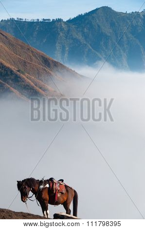 Lonely Brown Horse in front of mountains and blue sky