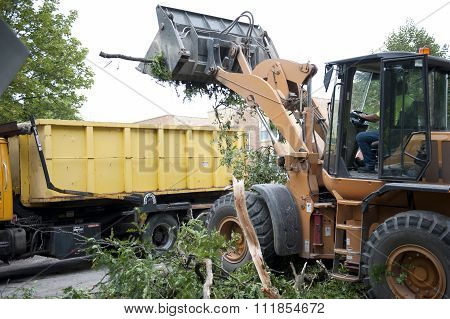 Branch Removal Outdoors