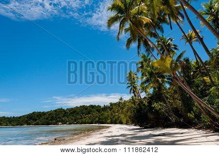 Palm trees at a Tropical Raja Ampat Beach with blue sky and ocean