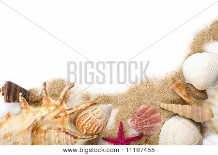 Sea Shells In Sand Isolated