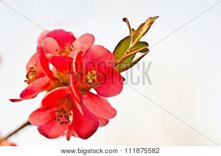 reb blosson on brunch