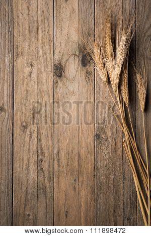 Ear Wheat