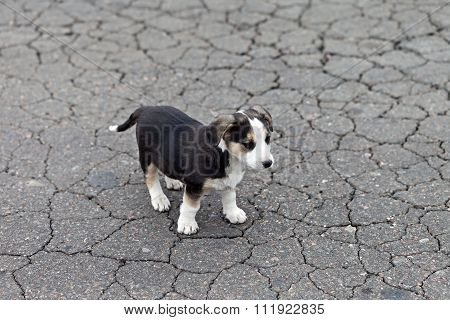 Lonely Sad Puppy
