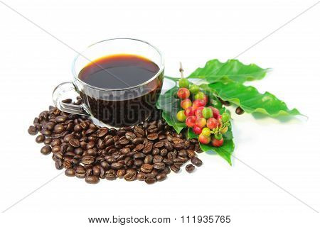 A cup of black coffee with roasted coffee beans, coffee leaves, red and green coffee berries.
