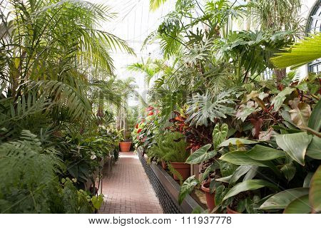 a greenhouse that holds different types of plants interior