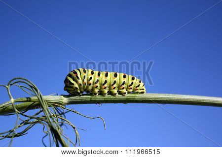 Caterpillar Crawling On The Branch
