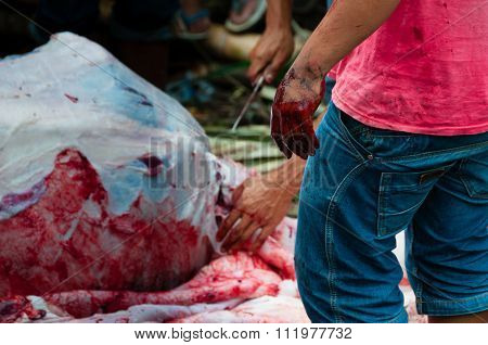 Hand full of blood in front a dead buffalo during the funeral