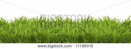 A Perspective View Of A Green Lush