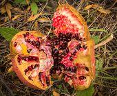 Image of racked ripe pomegranate Livadia Greece poster