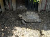 big turtle at local gardens in sc where we went on vacation poster