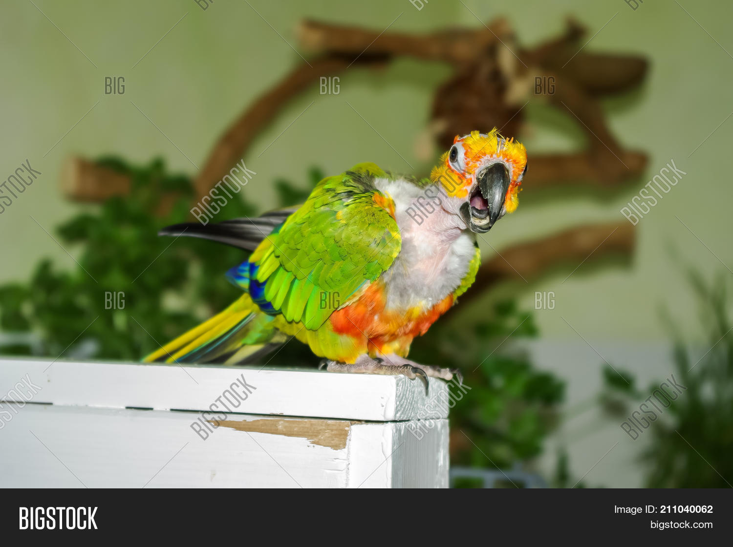 How can you call a parrot