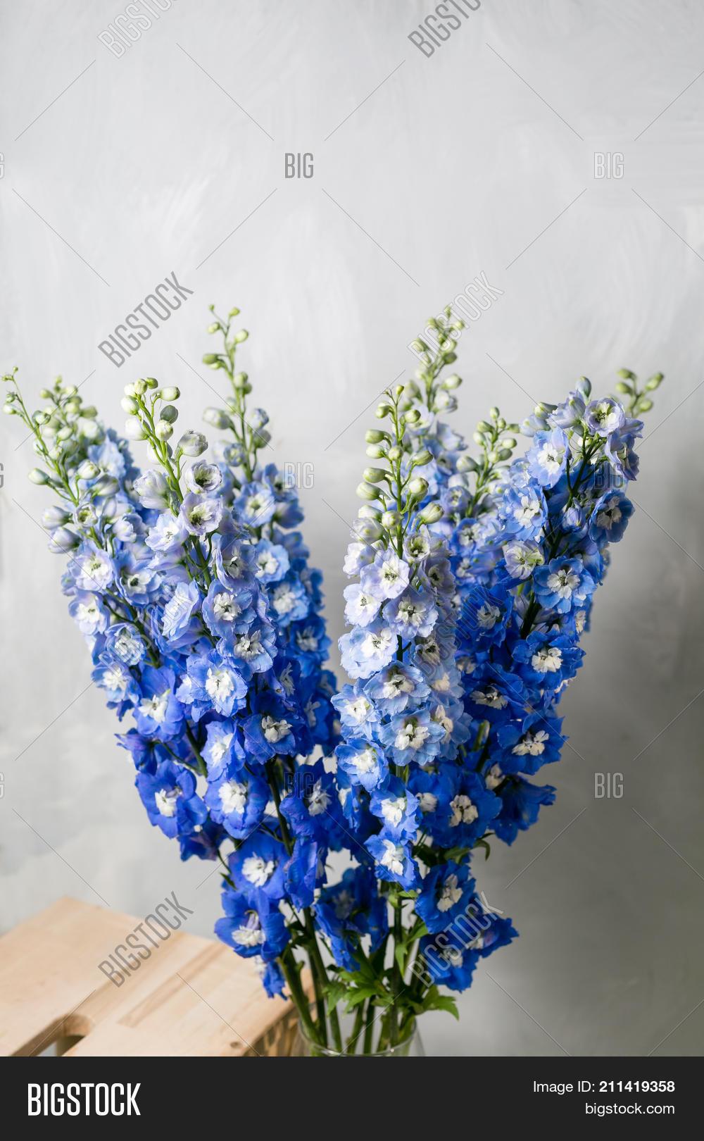 Blue Delphinium Flower Image Photo Free Trial Bigstock