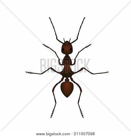 Formica exsecta. Sketch of ant. Ant isolated on white background. Ant Design for coloring book. hand-drawn ant. Vector illustration