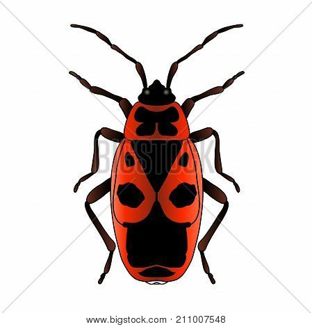 Pyrrhocoris apterus. beetle. Bug-soldier. Firebug. Sketch of beetle. Firebug isolated on white background. beetle Design for coloring book. hand-drawn beetle. Vector illustration