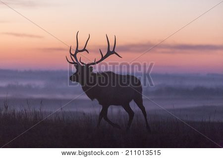 elk silhouette at sunrise; Maxwell Wildlife Preserve, Kansas