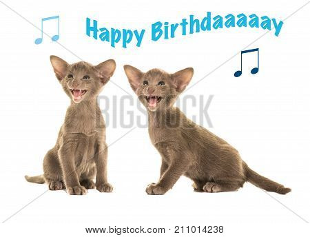 Happy birthday card with two grey siamese sitting kittens singing happy birthday