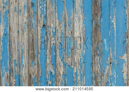 Blue wooden shelves of barn door with paint peeling of for background or backdrop