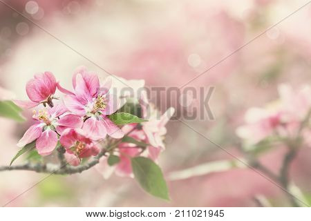 Peaceful pink spring flowers with extreme shallow depth of field and soft background.