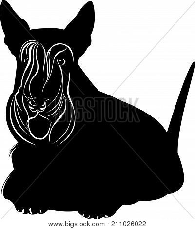 Scotch Terrier. Scotch terrier minimalist image on a white background