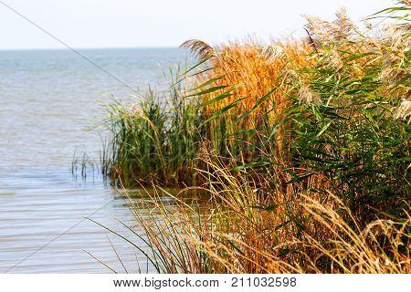 Autumn Water Landscape. Yellowed Reeds At The Estuary Near Odessa, Ukraine.