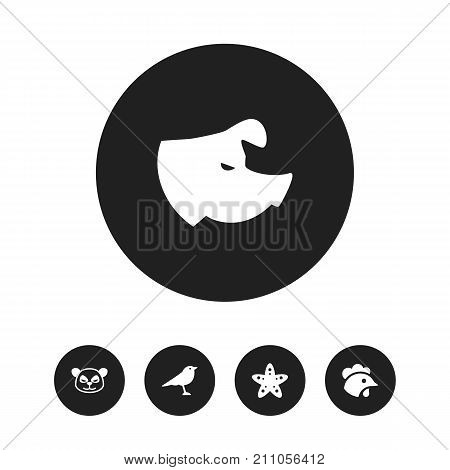 Set Of 5 Editable Zoo Icons. Includes Symbols Such As Sow, Rooster, Sea Star And More