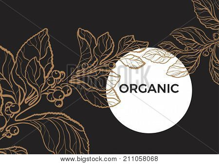 Vector template of mate branch. Floral art line illustration with golden leaves berries and flowers. Botanical realistic background with moon. Organic drink. Art deco eps.10