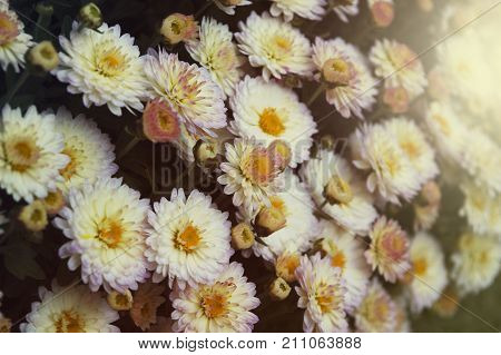 beautiful spring summer flowers background sunny day birthday celebration amazing niew of colorful flowers blooming in garden or field the middle of sunny spring or summer day green grass and beautiful flowers