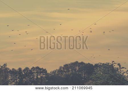 Flying birds on a vintage sky background. Retro photo of a flying birds