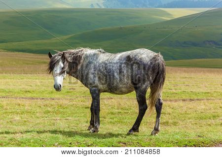young gray dappled horse standing on a field, hills on background