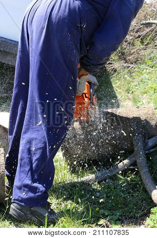 Woodcutter With Protective Workwear While Cutting A Trunk With T