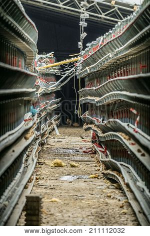 Abandoned damaged and stopped production line of chicken eggs of a poultry farm. Limited depth of field.