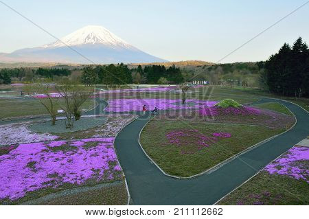 KAWAGUCHI, JAPAN - MAY 4, 2014 : Spring Landscape of colorful Shibazakura flower fields with Mount Fuji in Japan taken on May 4, 2014 at Shibazakura flower festival, one of major spring attraction.