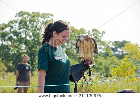 HASTINGS, MN/USA - SEPTEMBER 23, 2017: University of Minnesota Raptor Center Naturalist Kayla Wolfe presents hawk to crowd at Carpenter Nature Center during fall raptor release event in Hastings.