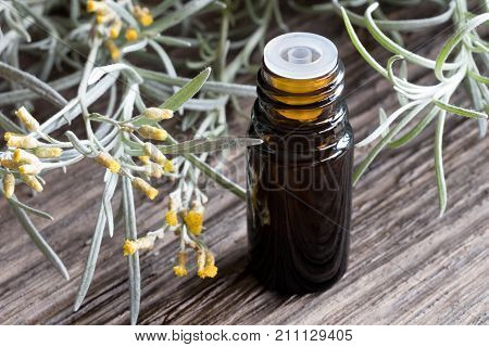 A Bottle Of Helichrysum Essential Oil With Blooming Helichrysum
