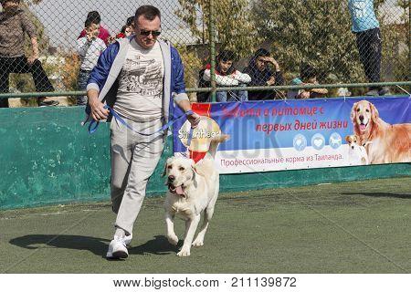 Handler with Labrador in the ring. Tashkent Uzbekistan. International Dog Show Oltin It October 15 2017