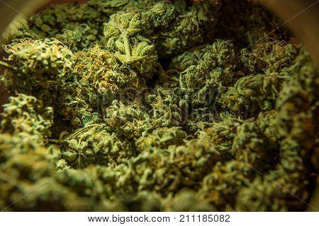 Cannabis marijuana sativa heads in the raw.