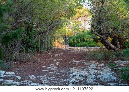 Pathway In A Mystical Forest