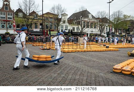 ALKMAAR NETHERLANDS - APRIL 21 2017: Carriers walking with many cheeses in the famous Dutch cheese market in Alkmaar The Netherlands. The event happens in the Waagplein square.