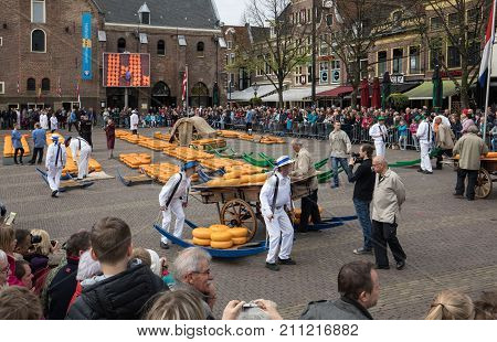 ALKMAAR THE NETHERLANDS - APRIL 21 2017: Typical cheese market in the city of Alkmaar in Netherlands one of the only four traditional Dutch cheese markets still in existence and one of the country's most popular tourist attractions.