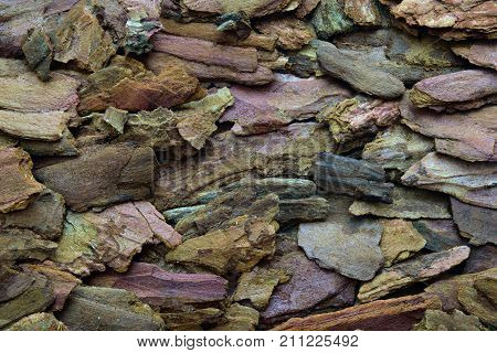 Background of brown pine bark. Organic substrate for orchids.