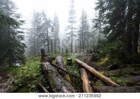 Misty Wet Morning In The Woods. Forest With Tree Trunks And Tourist Trails