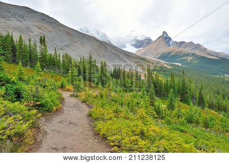 Alpine Trail Through The Canadian Rockies Along The Icefields Parkway Between Banff And Jasper