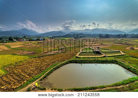 Rice field in countryside Nan province Thailand. View rice field from wat phuket temple at Pua District Nan Thailand.