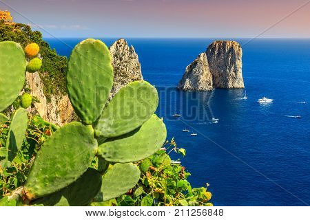 Beautiful cactus flower with Faraglioni cliffs panorama and the majestic Tyrrhenian sea, Capri island, Campania, Italy, Europe
